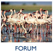 Safariland Forums